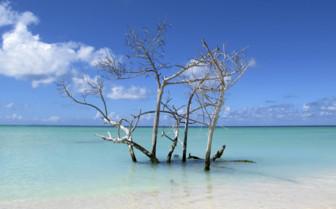Tropical driftwood