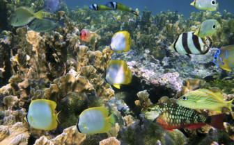 Belize Reef Fish
