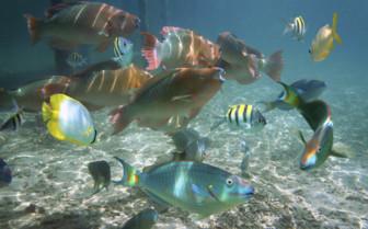 Belize Shoal Tropical Fish