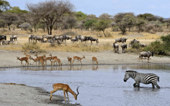 Selous Watering Holes