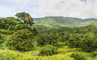 Grenada's Landscape