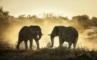 Elephants as the Sunsets Over Zimbabwe