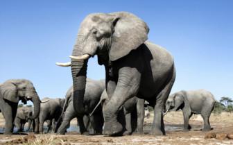 Elephant Heard