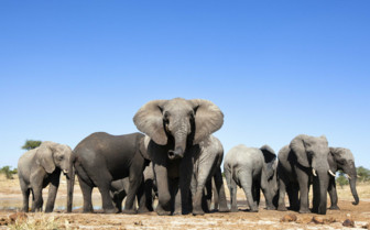 Heard of Elephants