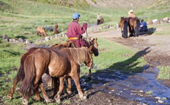 Mongolian Horse Rider
