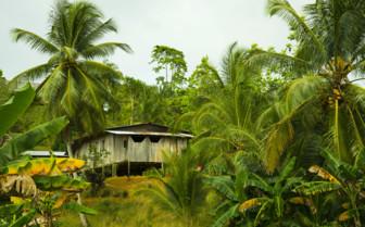 Tropical Tree House in Panama