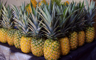 Tropical Pineapples in Nicaragua
