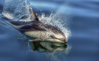 Dolphins in Scotland