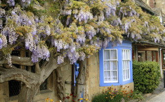 Cotswolds Cottage in Bloom