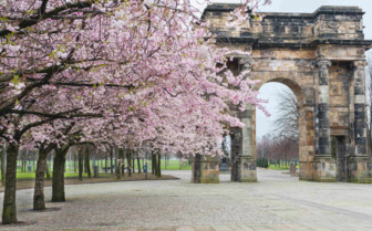Cherry Blossom in Glasgow