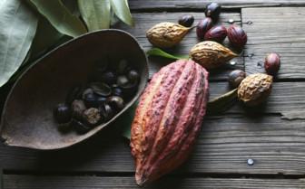 Cocoa and Nutmeg, Grenada