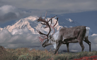 Caribou, Alaska