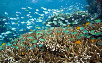 Coral and fish at Menjangan island