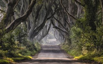 Dark Hedged Road, Ireland