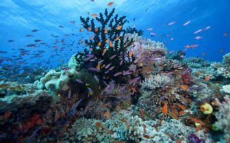 A coral reef in Vunau Levu