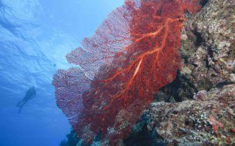 A diver in Vanua Levu