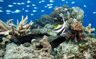 Image of a coral reef