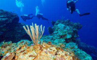 Colourful reef diving