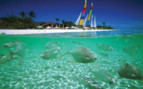 Picture of Sailing with the Fish at Amanpulo