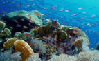 Picture of colourful reef at Palau