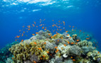 Picture of Northern Red Sea Scuba Diving