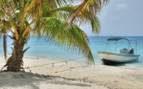 Picture of a boat tied to a palm tree on the Belizean coast