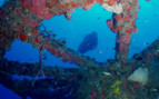 Picture of diving in the Florida Keys
