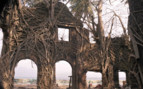 Ruins on the Andamans