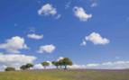 Trees in Lavender Fields