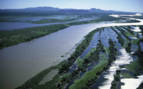 Aerial View of Pantanal Wetlands