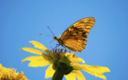Butterfly and blue skies in Costa Rica
