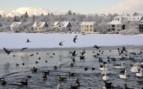Snowy scene in Reykajavik