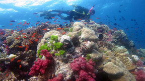 Picture of diving Namena Marine Reserve in Vanua Levu