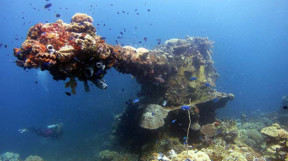 Picture of wreck diving in Chuuk Lagoon
