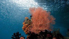 Pink coral with fish in the blue behind