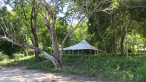 A tent in the jungle in Moyo Island