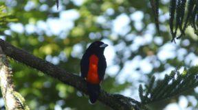Bird in Panama