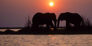 Elephant shadow in sunset