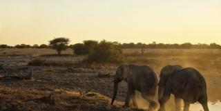 Elephants in Zambezi National Park