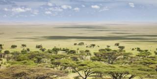 Tanzania View