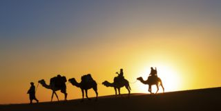 Camels Silhouettes, Sunset over Dubai