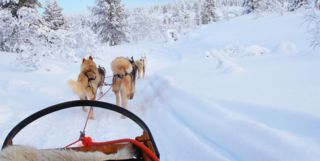 Husky Sled in Finnish Lapland