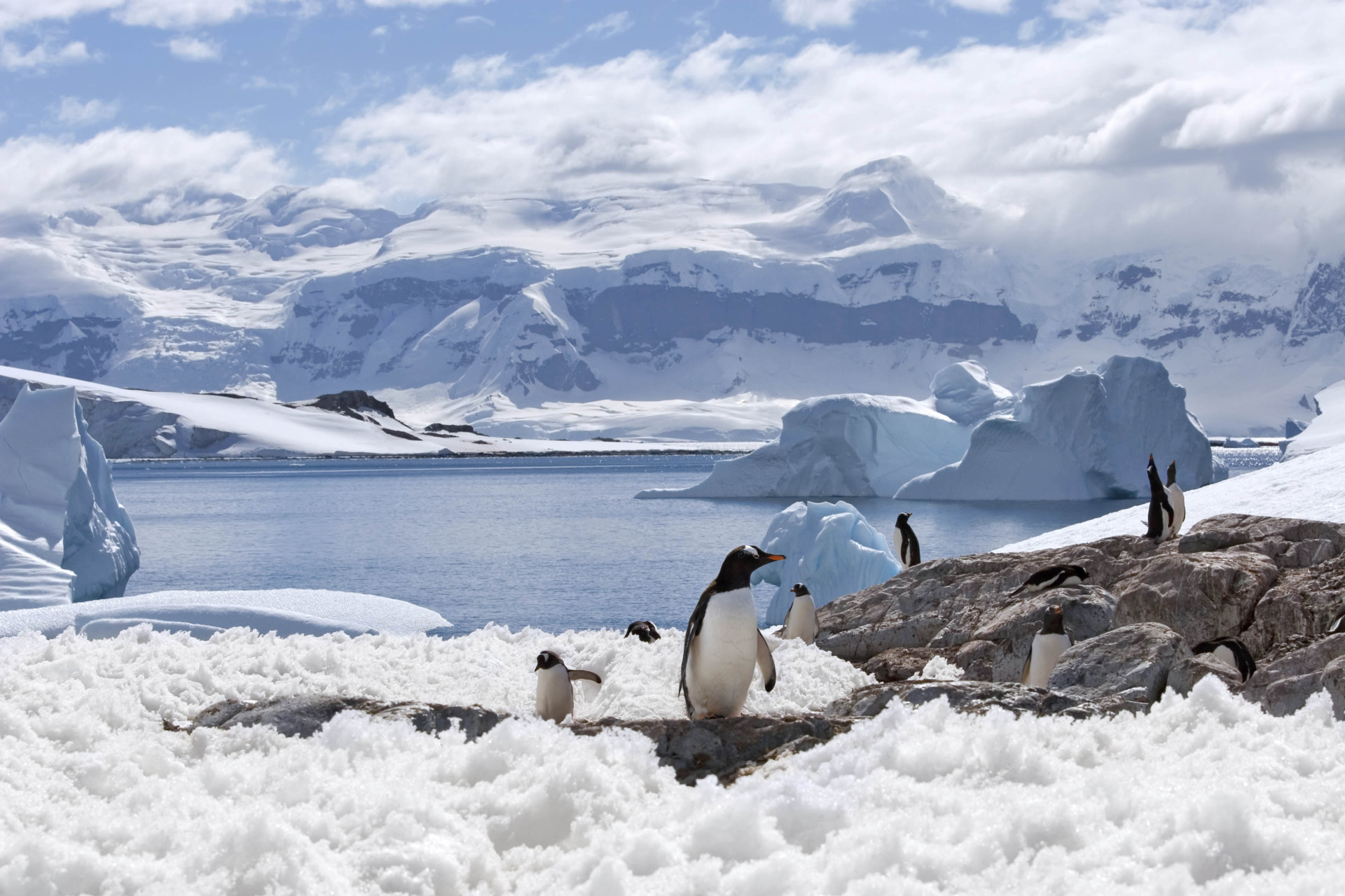 Things to do in antarctica visit the south pole for Best places to visit in antarctica