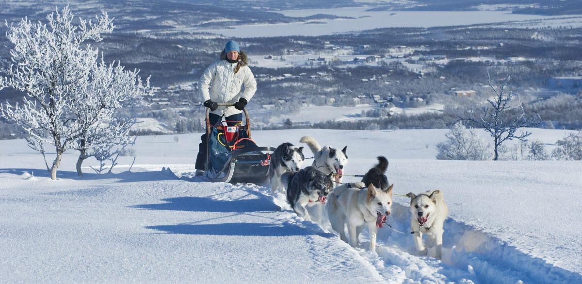 how to go dog sledding