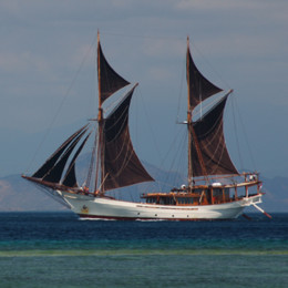 Picture of Silolona liveaboard in Indonesia