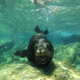 Picture of a sea lion in Baja California